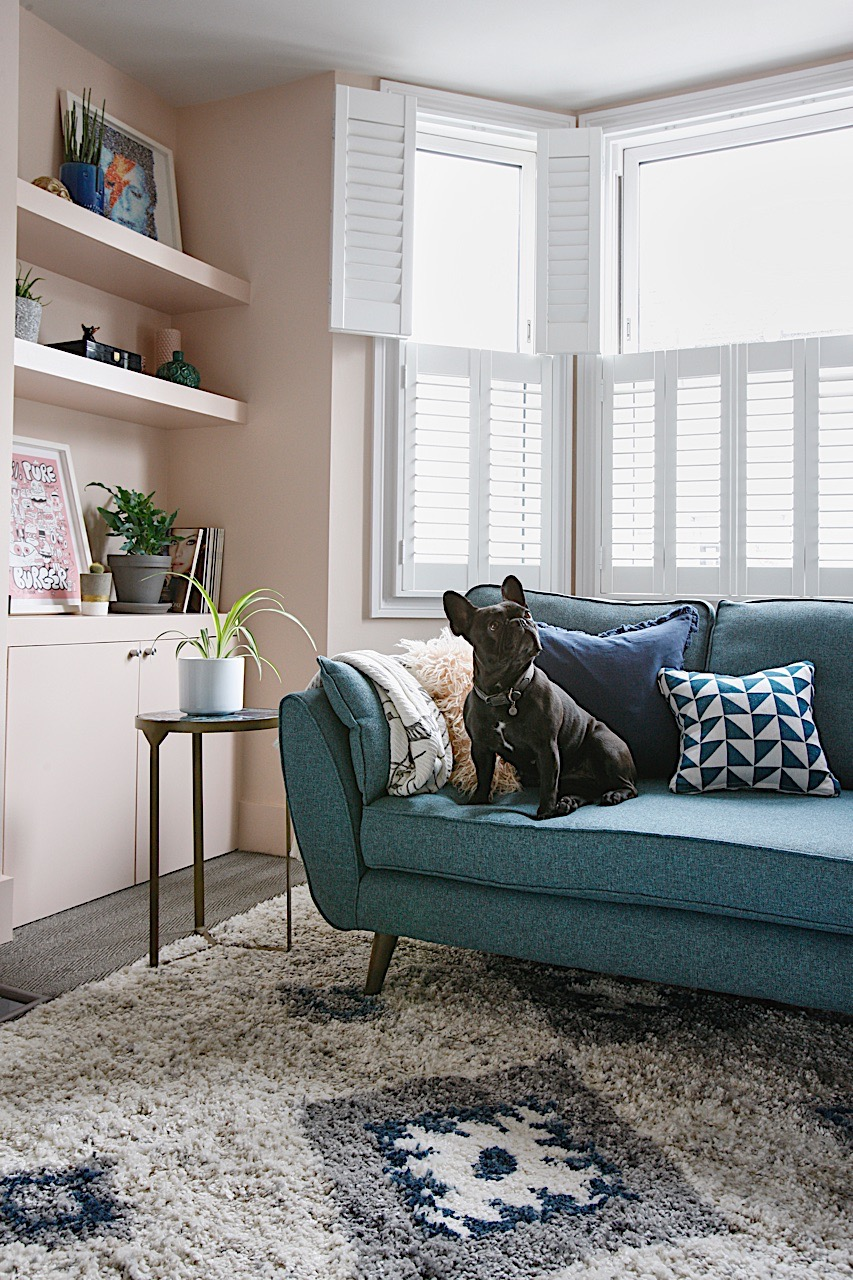 Dog on sofa in living room